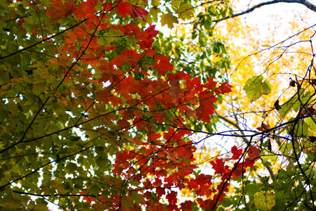 10-23-159-red-leaves.jpg