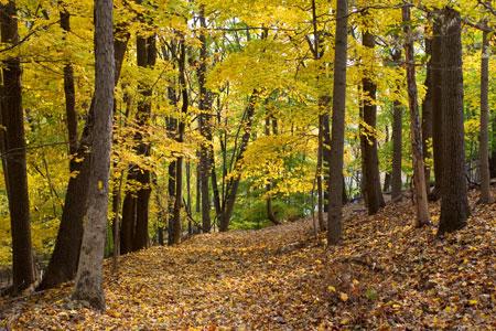 11-05-024-woods.jpg